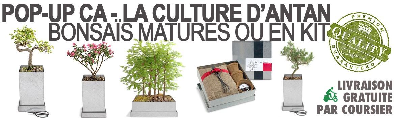 Livraison gratuite de bonsais par coursier Paris
